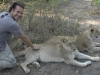 Petting lions- yes, that\'s right, LIONS- Livingstone, Zambia
